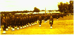 1964 Scotch College Army Cadet Officers and N.C.Os